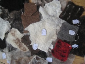 Some of the rare breed samples