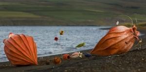 Anna Gunnarsdottir's sea shells