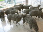 Telephone Sheep