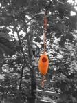 Orange & yellow bird's nest by Sheila Ahern